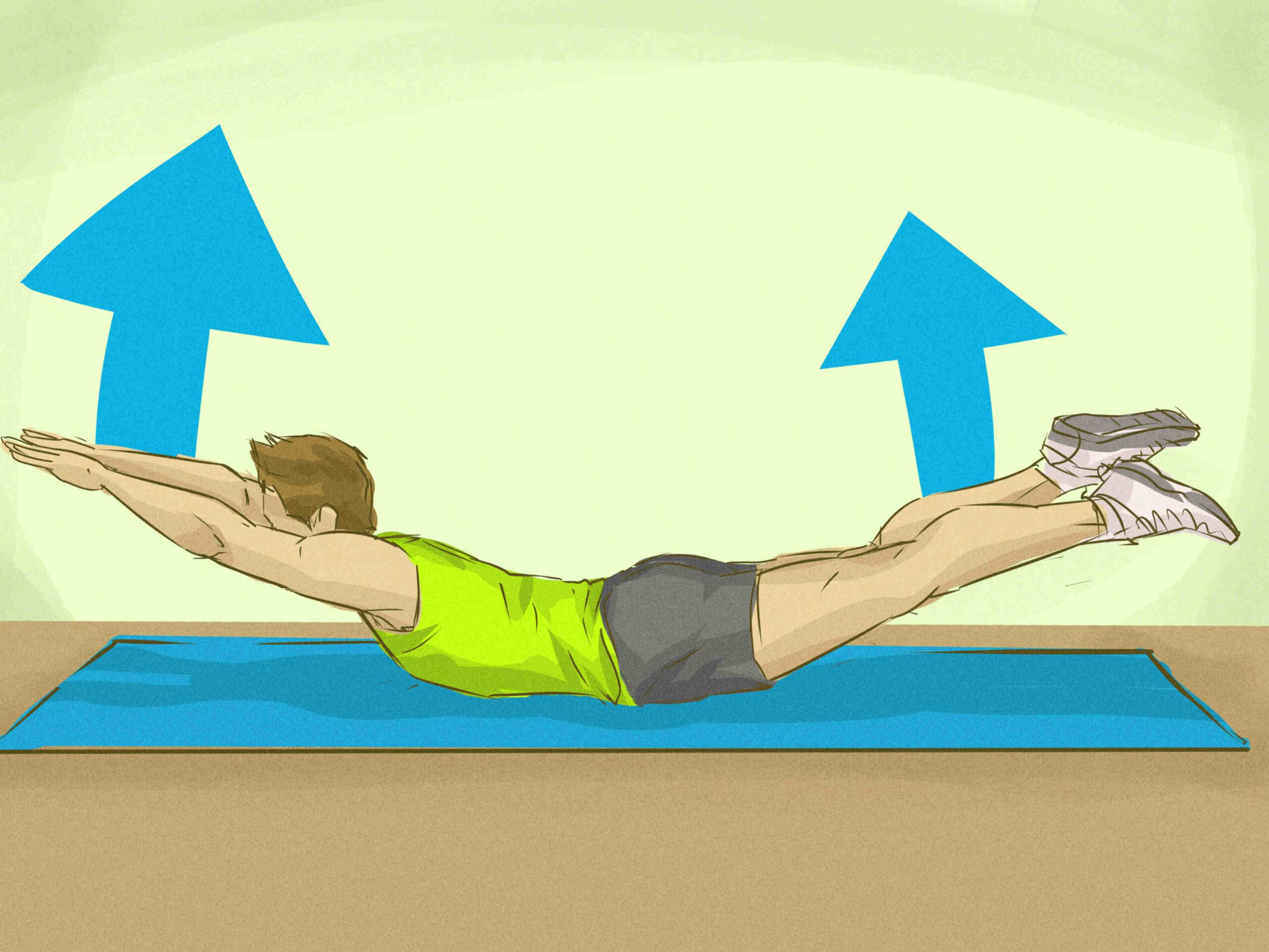 Où se termine le muscle supinateur ?